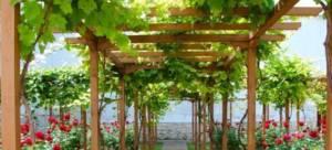 Изготовление деревянных пергол для винограда
